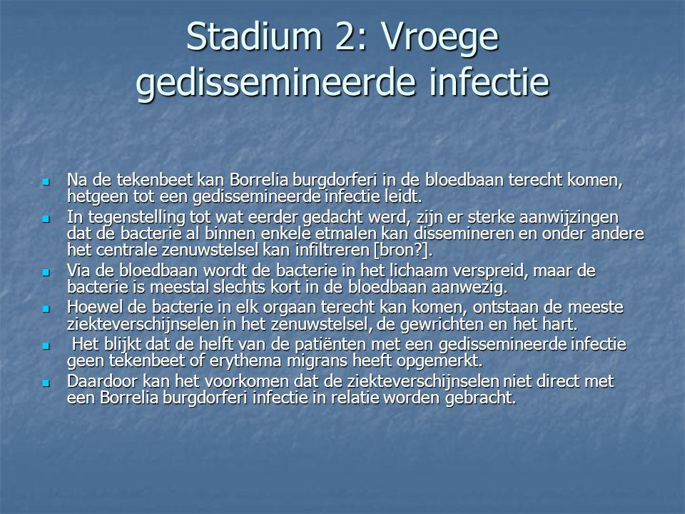 Stadium 2: Vroege gedissemineerde infectie Na de tekenbeet kan Borrelia burgdorferi in de bloedbaan terecht komen, hetgeen tot een gedissemineerde inf