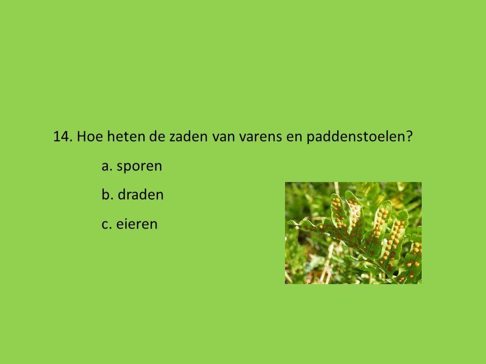13. Welk zoogdier kan vliegen en leeft vaak in de bomen? a. eekhoorn b. wants c. vleermuis d. uil