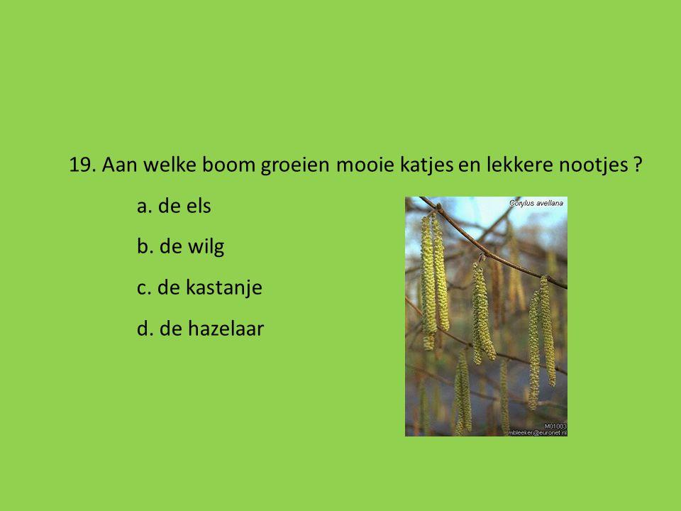 18. Welke vogel zal je niet zien op de voedertafel in je tuin ? a. de raaf b. de koolmees c. het roodborstje d. een mus