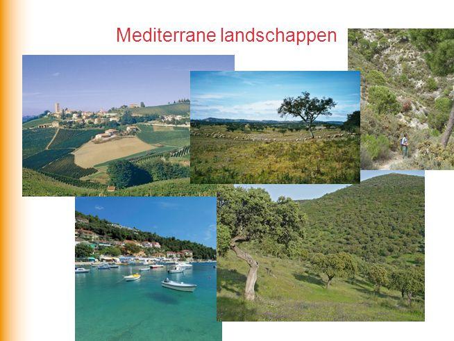 Mediterrane landschappen