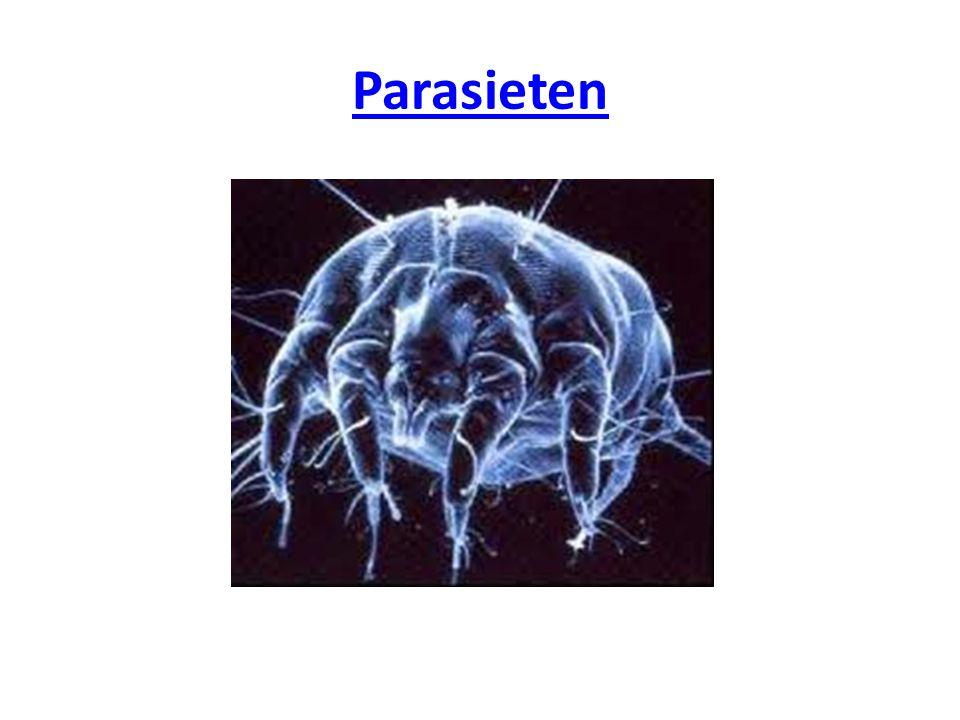 Bij mens, dier en plant zijn vele parasieten beschreven.
