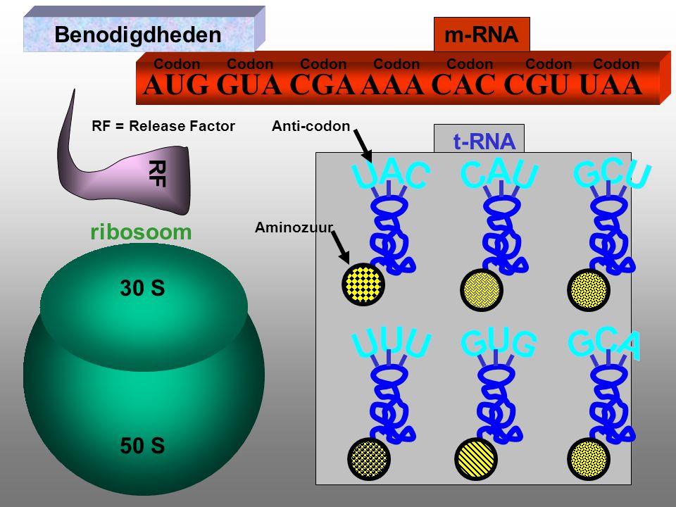 AUG GUA CGA AAA CAC CGU UAA m-RNA ribosoom t-RNA Benodigdheden RF RF = Release Factor 30 S 50 S Anti-codon Codon Aminozuur