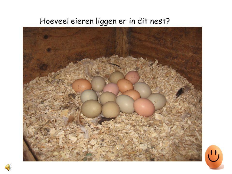 Hé, deze kip heeft net een ei gelegd.
