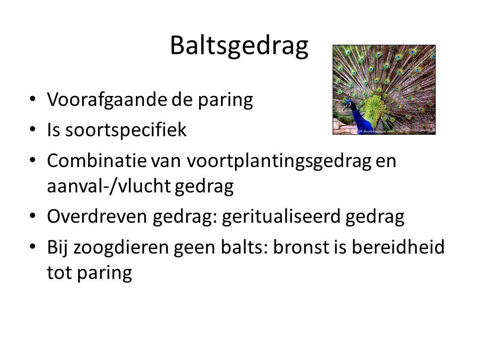 Baltsgedrag Voorafgaande de paring Is soortspecifiek Combinatie van voortplantingsgedrag en aanval-/vlucht gedrag Overdreven gedrag: geritualiseerd ge