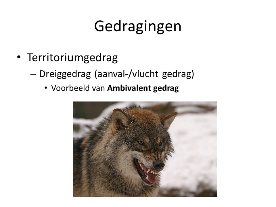 Gedragingen Territoriumgedrag – Dreiggedrag (aanval-/vlucht gedrag) Voorbeeld van Ambivalent gedrag