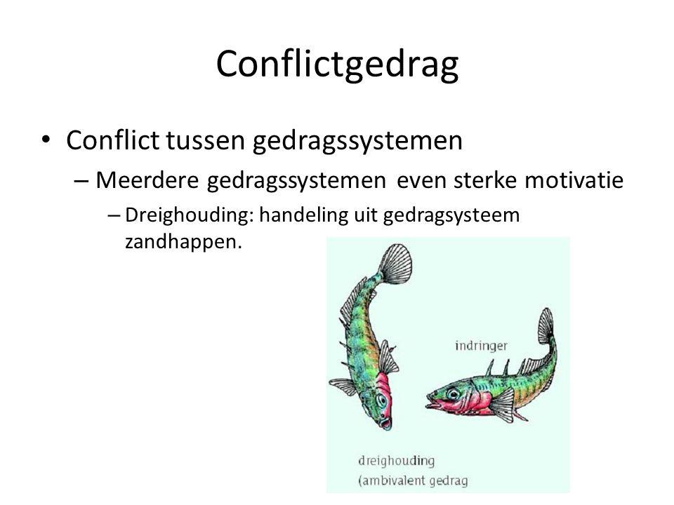 Conflictgedrag Conflict tussen gedragssystemen – Meerdere gedragssystemen even sterke motivatie – Dreighouding: handeling uit gedragsysteem zandhappen