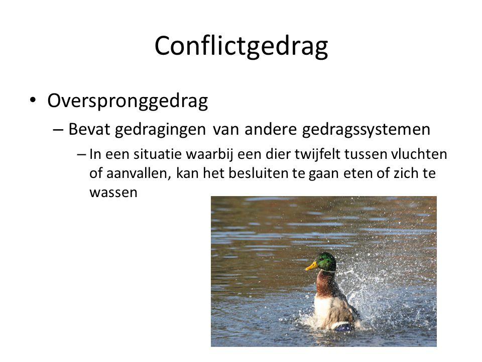 Conflictgedrag Overspronggedrag – Bevat gedragingen van andere gedragssystemen – In een situatie waarbij een dier twijfelt tussen vluchten of aanvalle