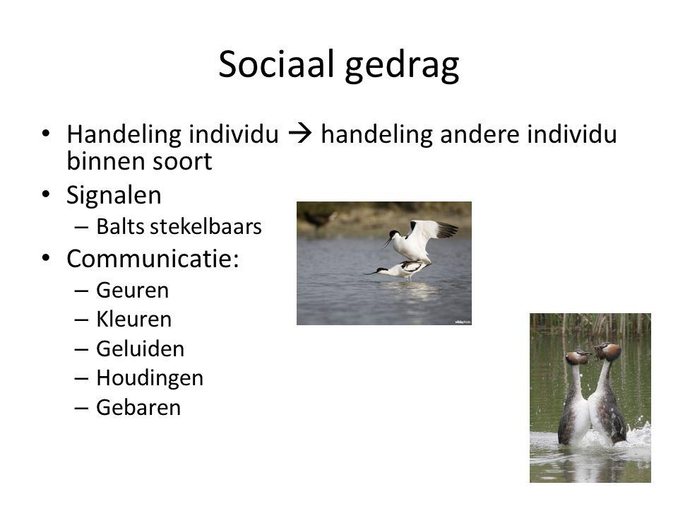 Sociaal gedrag Handeling individu  handeling andere individu binnen soort Signalen – Balts stekelbaars Communicatie: – Geuren – Kleuren – Geluiden –
