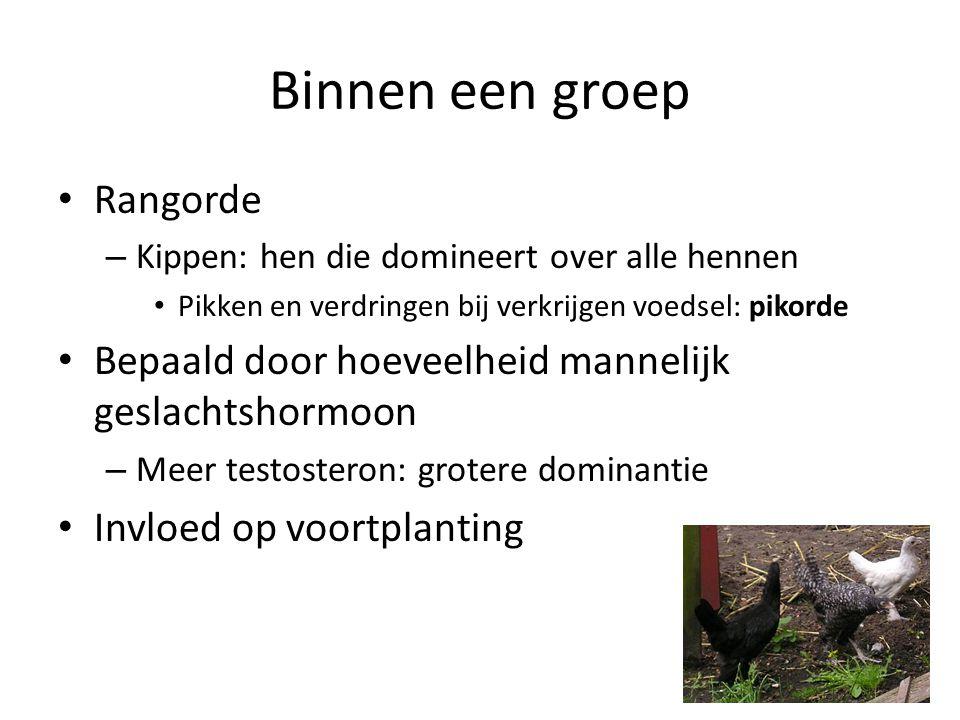 Binnen een groep Rangorde – Kippen: hen die domineert over alle hennen Pikken en verdringen bij verkrijgen voedsel: pikorde Bepaald door hoeveelheid m