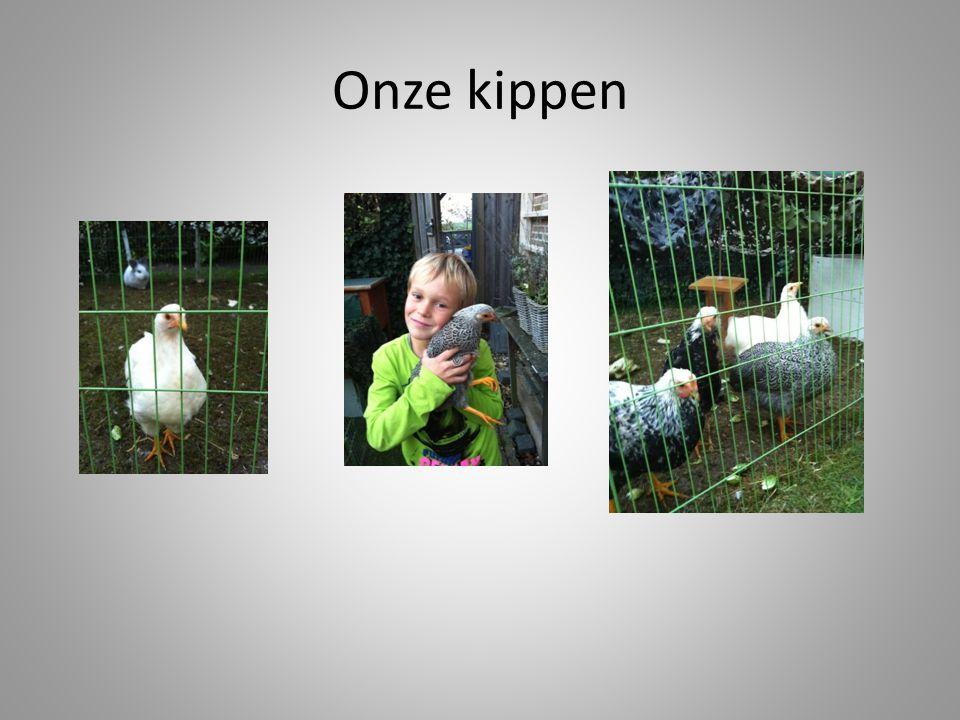 Onze kippen