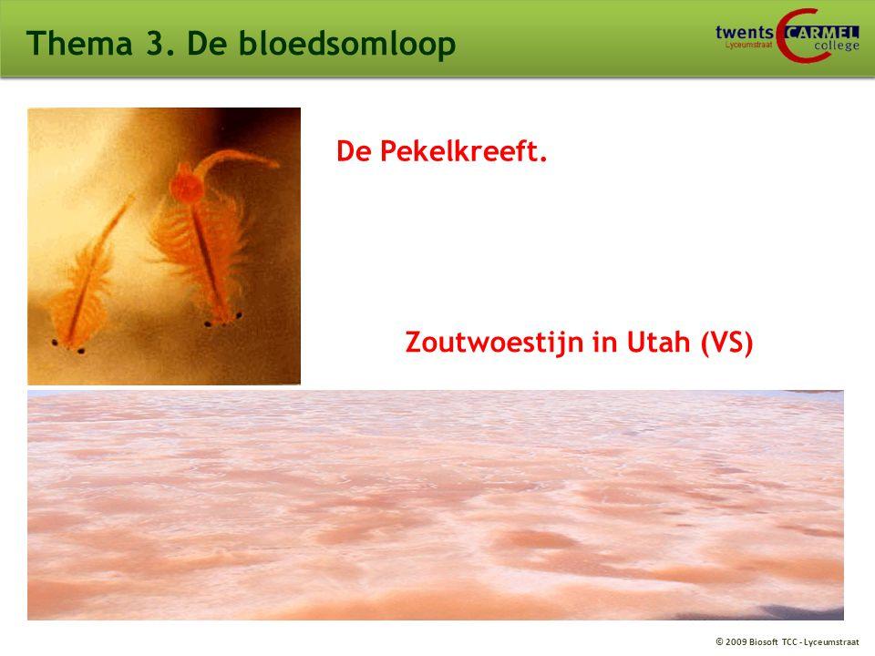 © 2009 Biosoft TCC - Lyceumstraat Thema 3. De bloedsomloop De Pekelkreeft. Zoutwoestijn in Utah (VS)