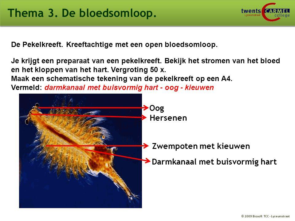 © 2009 Biosoft TCC - Lyceumstraat Thema 3. De bloedsomloop. De Pekelkreeft. Kreeftachtige met een open bloedsomloop. Je krijgt een preparaat van een p