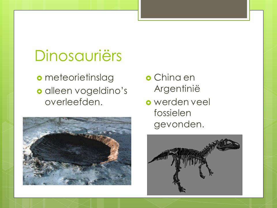 Dinosauriërs De huid : -Warmbloedig -schubben  Dinosauriërs waren reptielen die eieren legden.