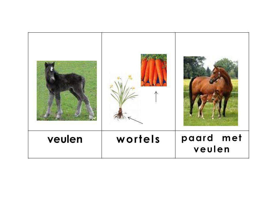knop veulenwortels paard met veulen