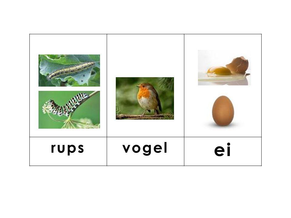 knop rupsvogel ei