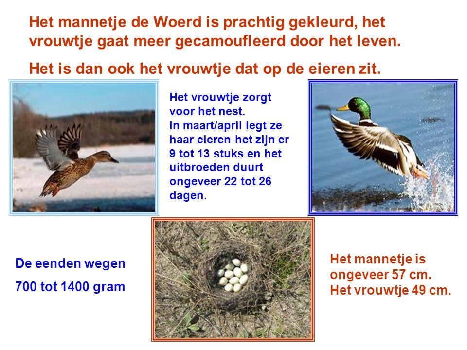 made by tillygemaakt voor: powerpointsite- bep.nl