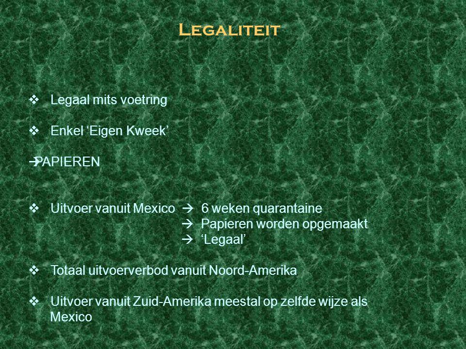 Legaliteit  Legaal mits voetring  Enkel 'Eigen Kweek'  PAPIEREN  Uitvoer vanuit Mexico  6 weken quarantaine  Papieren worden opgemaakt  'Legaal