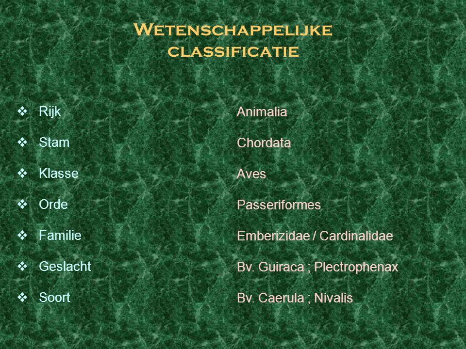 Wetenschappelijke classificatie  Rijk  Stam  Klasse  Orde  Familie  Geslacht  Soort Animalia Chordata Aves Passeriformes Emberizidae / Cardinal