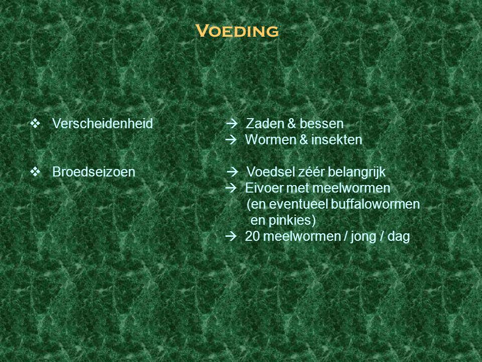 Voeding  Verscheidenheid  Zaden & bessen  Wormen & insekten  Broedseizoen  Voedsel zéér belangrijk  Eivoer met meelwormen (en eventueel buffalow