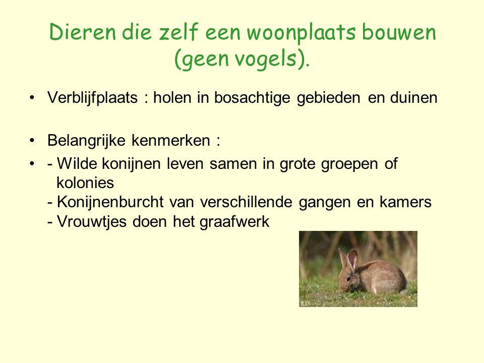 Dieren die zelf een woonplaats bouwen (geen vogels). Verblijfplaats : holen in bosachtige gebieden en duinen Belangrijke kenmerken : - Wilde konijnen