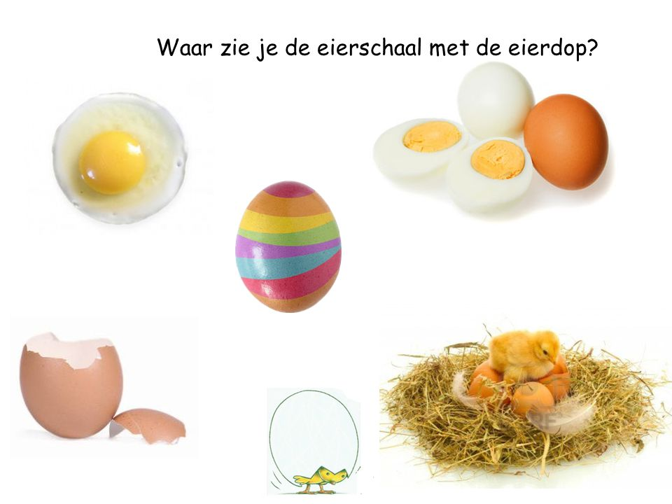 Waar zie je de eieren in het nest?