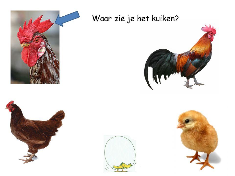 Waar zie je de kip?