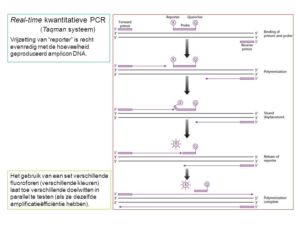 Real-time kwantitatieve PCR (Taqman systeem) Vrijzetting van reporter is recht evenredig met de hoeveelheid geproduceerd amplicon DNA.