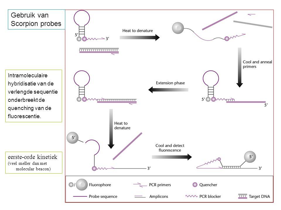 Gebruik van Scorpion probes eerste-orde kinetiek (veel sneller dan met molecular beacon) Intramoleculaire hybridisatie van de verlengde sequentie onderbreekt de quenching van de fluorescentie.