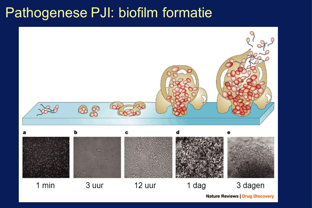 Pathogenese PJI: biofilm formatie 3 uur1 min12 uur1 dag3 dagen