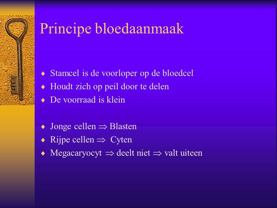 Principe bloedaanmaak  Stamcel is de voorloper op de bloedcel  Houdt zich op peil door te delen  De voorraad is klein  Jonge cellen  Blasten  Ri