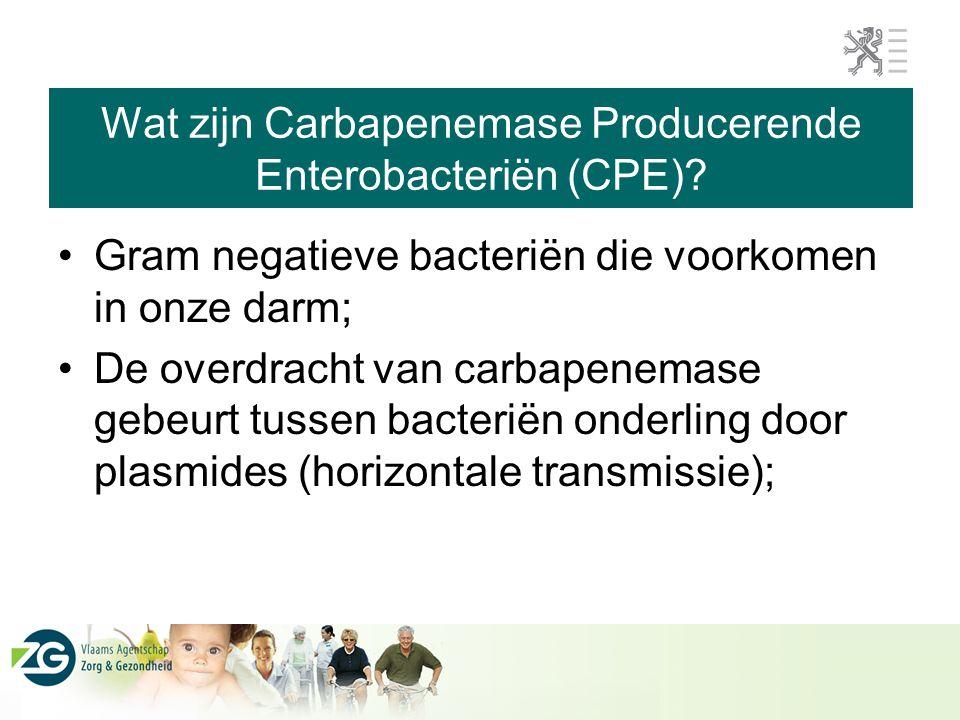 Gram negatieve bacteriën die voorkomen in onze darm; De overdracht van carbapenemase gebeurt tussen bacteriën onderling door plasmides (horizontale transmissie);