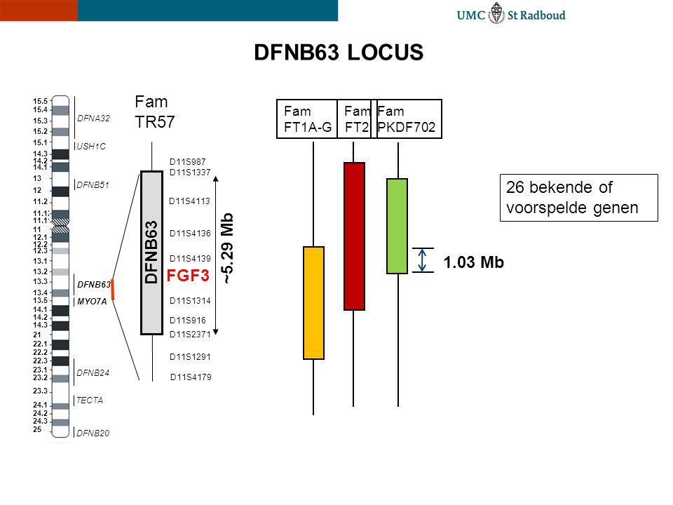 DFNB63 LOCUS TECTA MYO7A USH1C DFNA32 DFNB20 DFNB24 DFNB51 DFNB63 D11S2371 D11S1337 D11S4179 D11S1291 D11S916 D11S1314 D11S4139 D11S4136 D11S4113 D11S