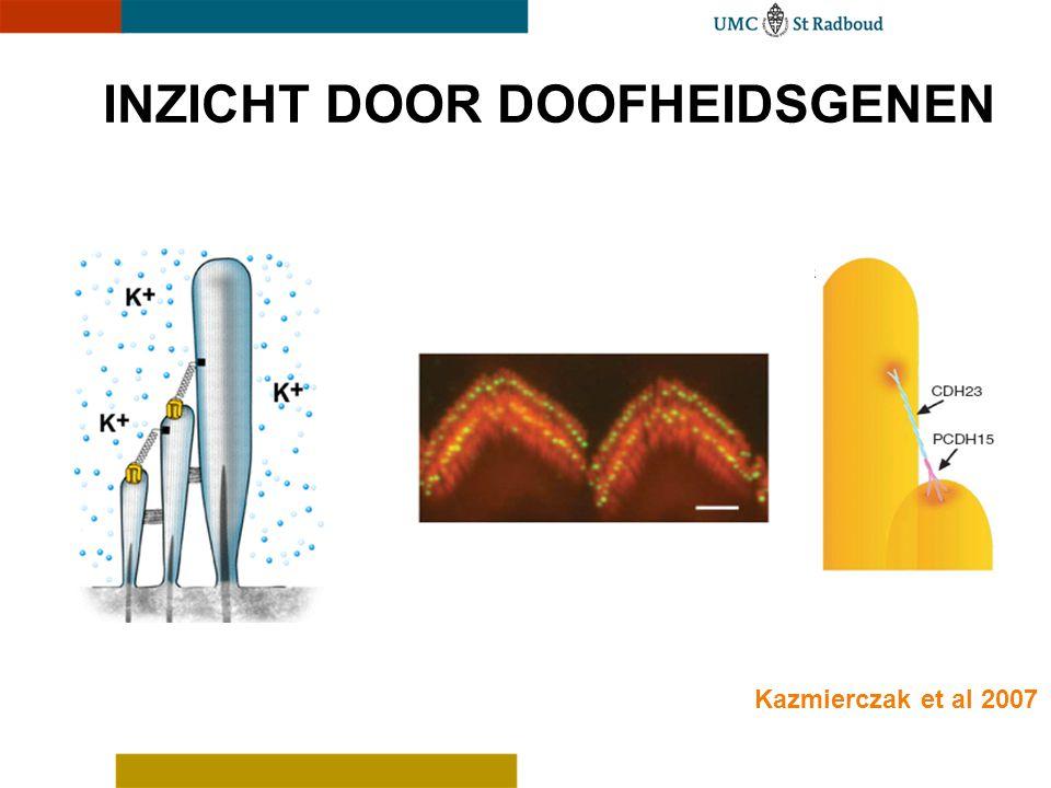 INZICHT DOOR DOOFHEIDSGENEN Kazmierczak et al 2007