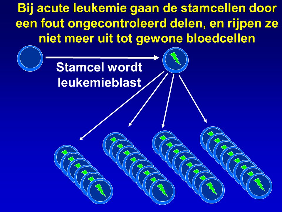 Bij acute leukemie gaan de stamcellen door een fout ongecontroleerd delen, en rijpen ze niet meer uit tot gewone bloedcellen Stamcel wordt leukemiebla