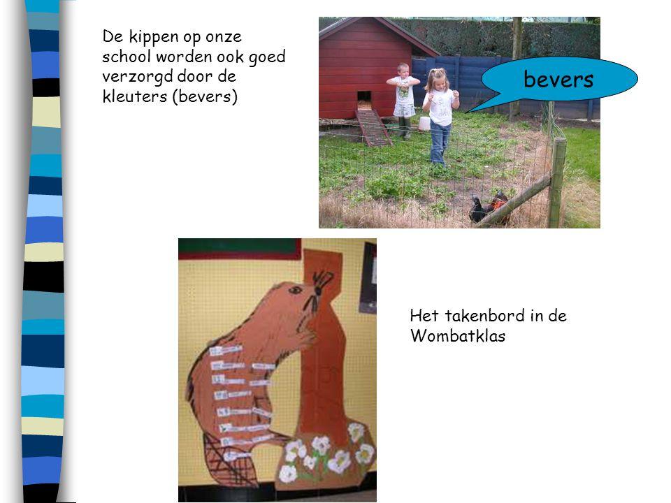 De kippen op onze school worden ook goed verzorgd door de kleuters (bevers) bevers Het takenbord in de Wombatklas