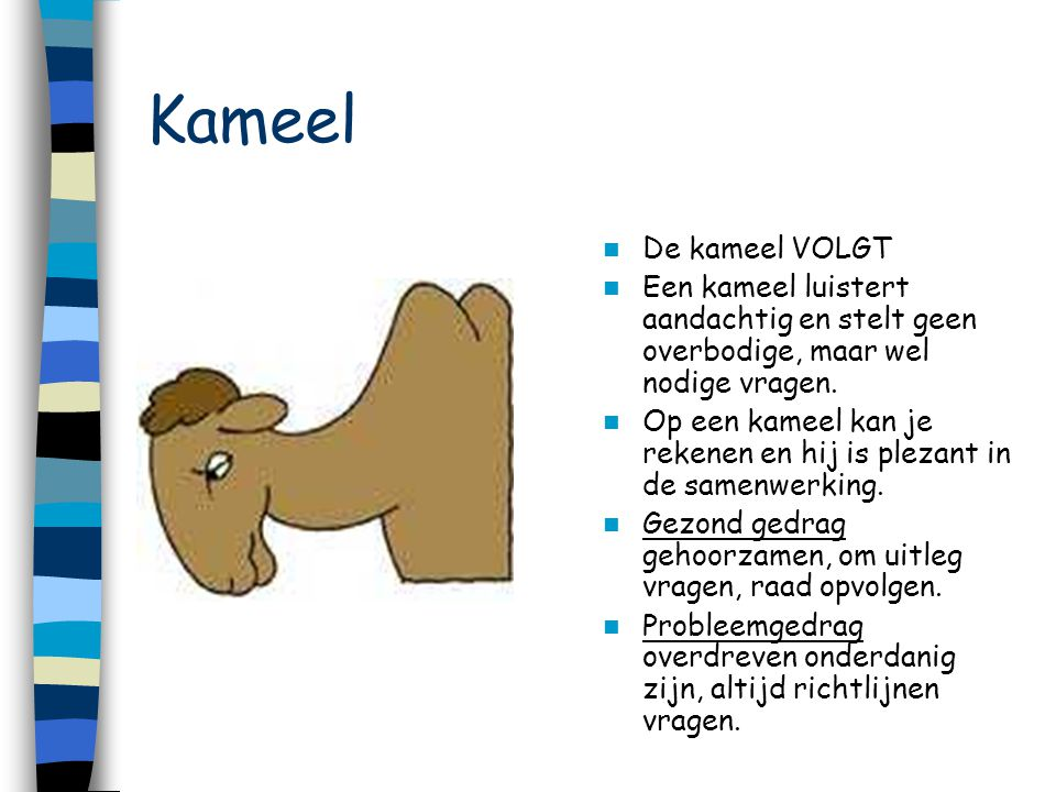 Kameel De kameel VOLGT Een kameel luistert aandachtig en stelt geen overbodige, maar wel nodige vragen. Op een kameel kan je rekenen en hij is plezant