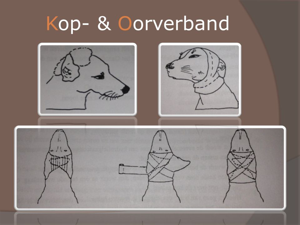Kop- & Oorverband