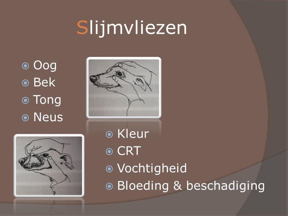 Vergiftiging  Eerste hulp:  Elimineren  Tegengif  Stabiliseren  Eerst dierenarts bellen