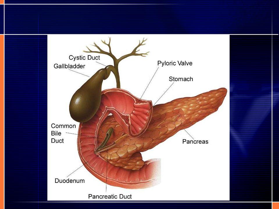 Overgewicht Weinig beweging kan leiden tot overgewicht.