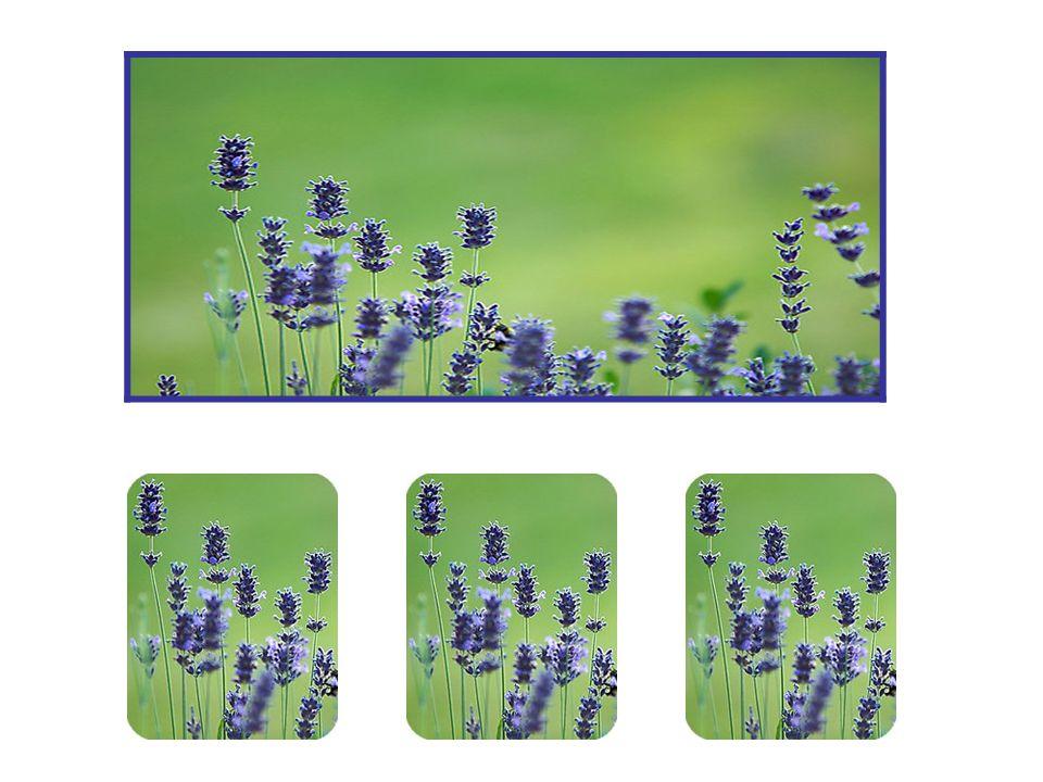 Je kunt er op een eenvoudige manier achter komen hoe goed Aromaterapie kan zijn. Druppel wat lavendelolie in je bad. Je merkt direct het verschil. Wan