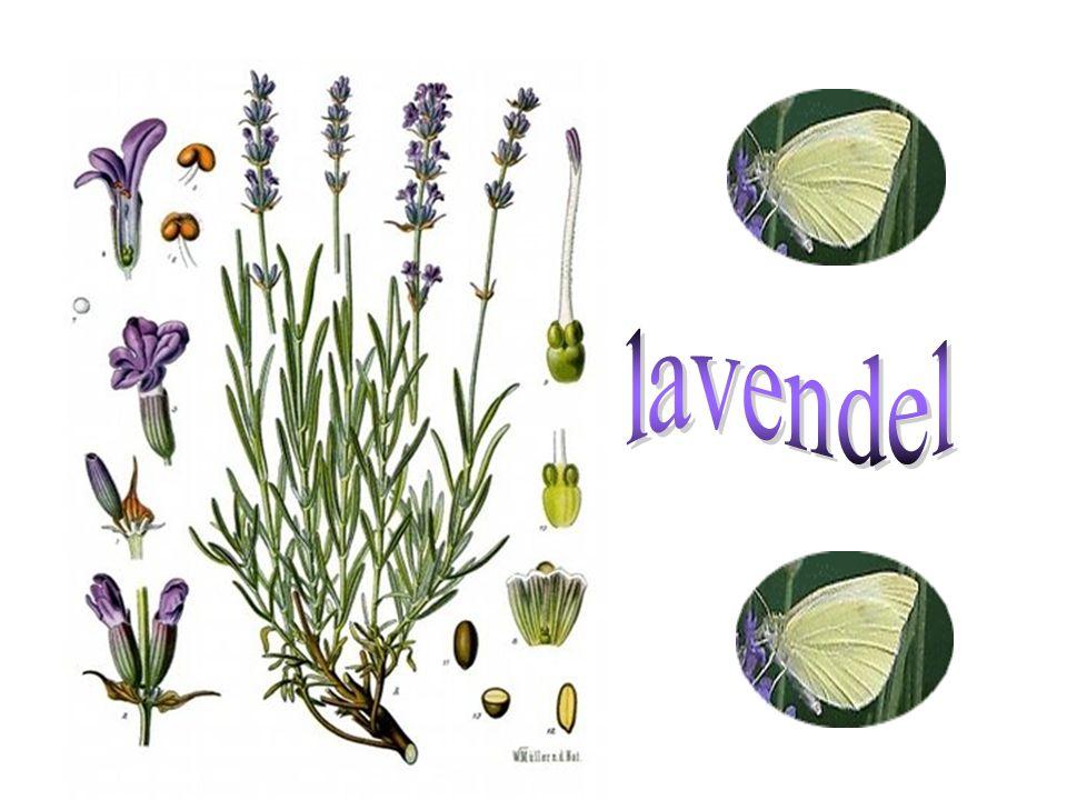Het is vandaag zaterdag 19 juli 2014 En het is 01:21 uur Wordt geactiveerd: Lavendel All the best, and have a Nice Day….