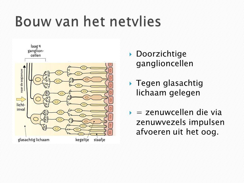  Doorzichtige ganglioncellen  Tegen glasachtig lichaam gelegen  = zenuwcellen die via zenuwvezels impulsen afvoeren uit het oog.