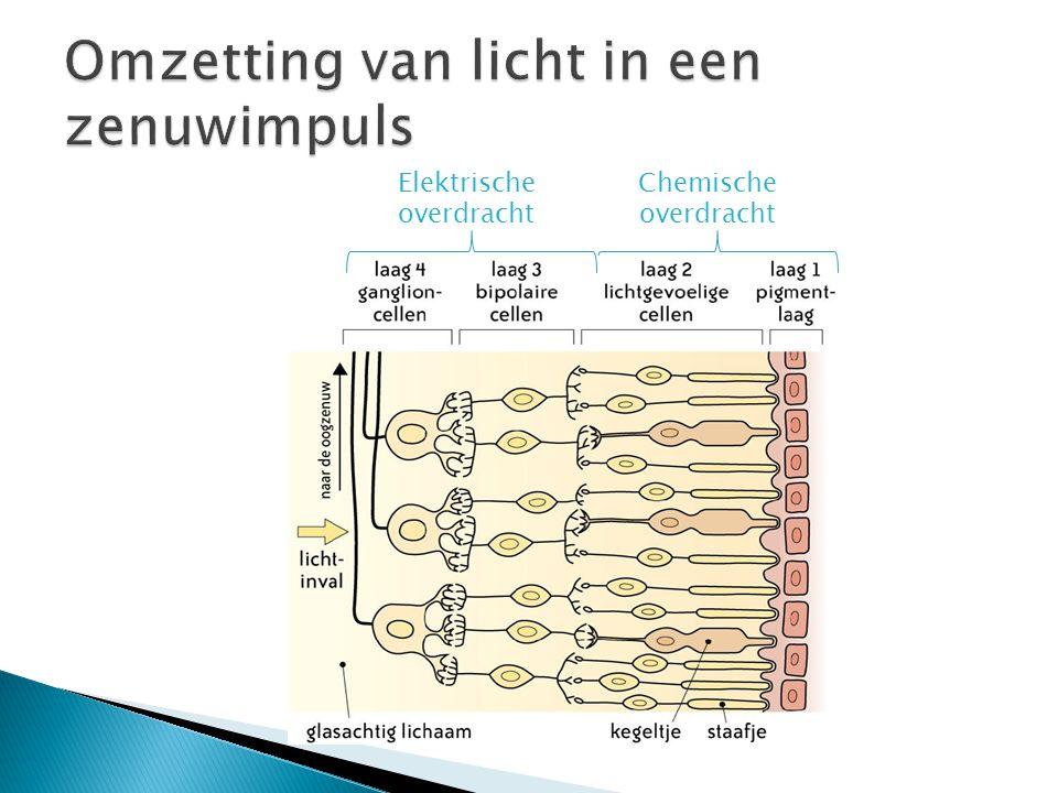 Elektrische overdracht Chemische overdracht