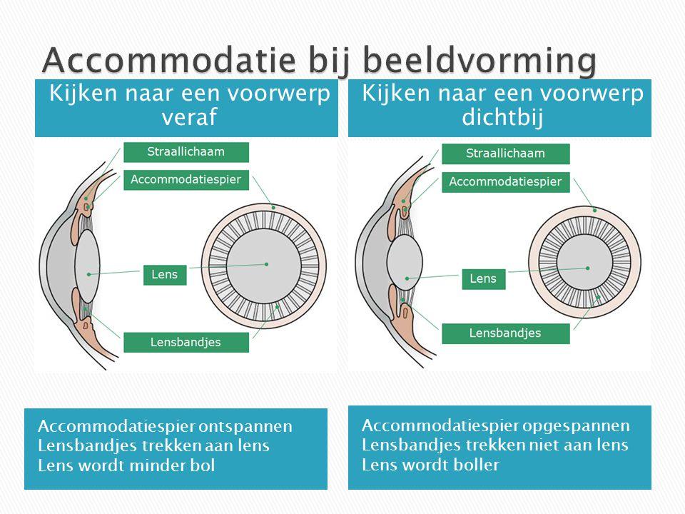 Accommodatiespier ontspannen Lensbandjes trekken aan lens Lens wordt minder bol Accommodatiespier opgespannen Lensbandjes trekken niet aan lens Lens w
