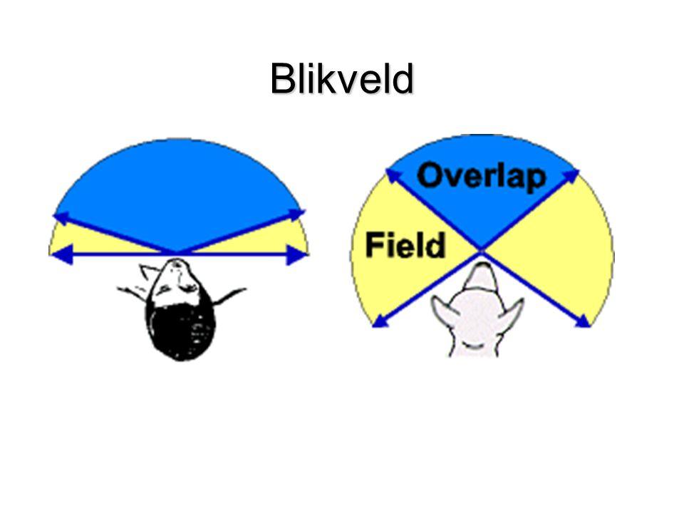 Blikveld