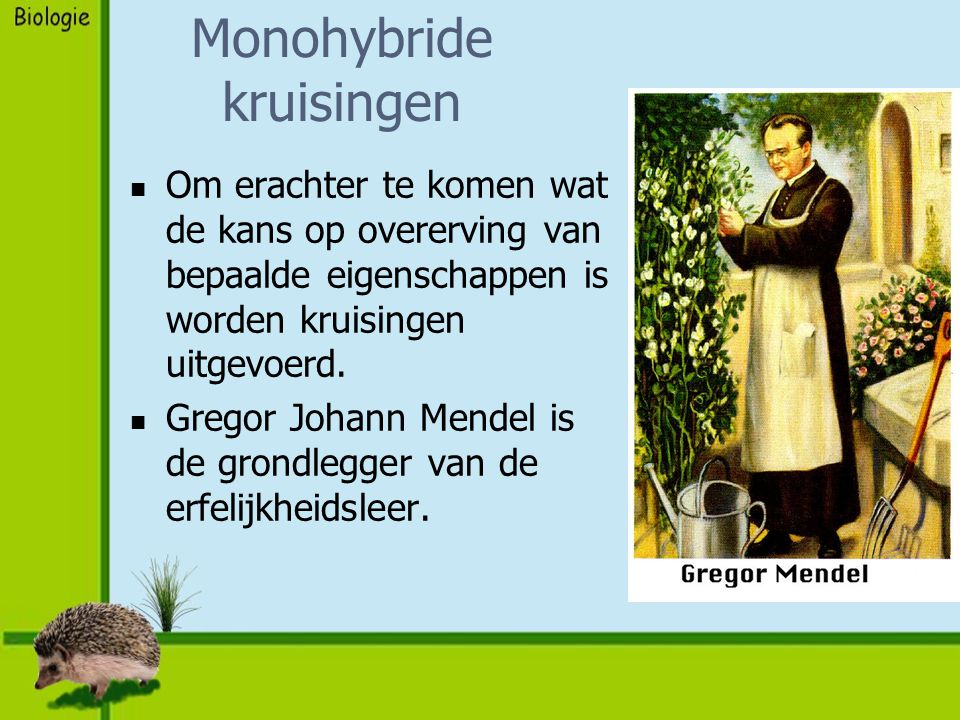 Monohybride kruisingen Om erachter te komen wat de kans op overerving van bepaalde eigenschappen is worden kruisingen uitgevoerd. Gregor Johann Mendel
