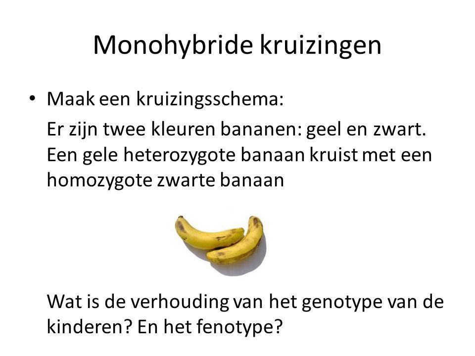 Monohybride kruizingen Maak een kruizingsschema: Er zijn twee kleuren bananen: geel en zwart. Een gele heterozygote banaan kruist met een homozygote z
