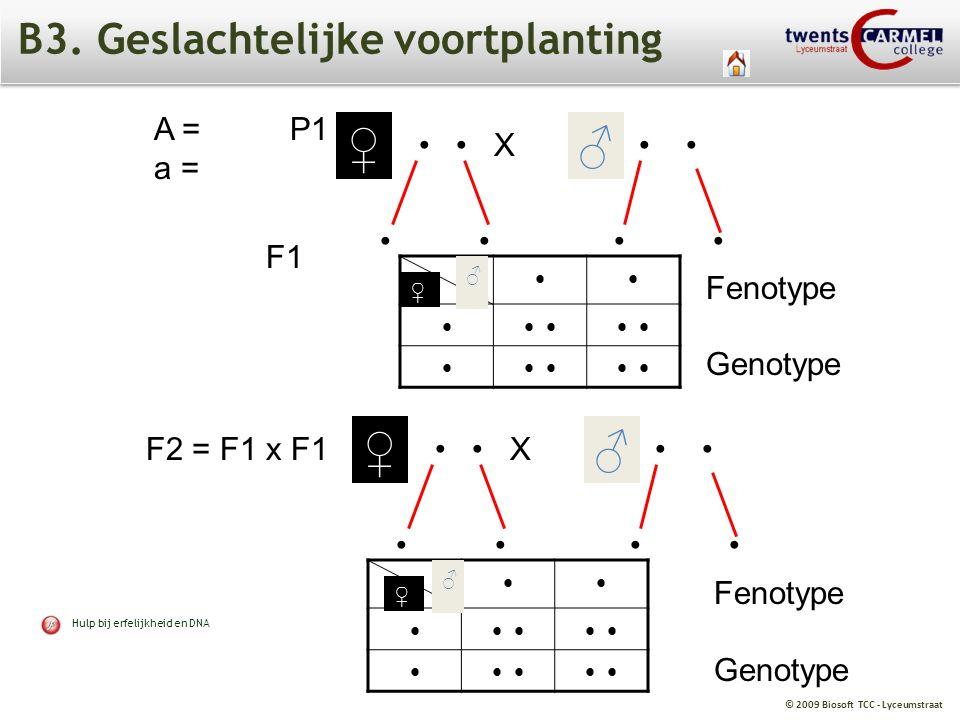 © 2009 Biosoft TCC - Lyceumstraat B3. Geslachtelijke voortplanting A = a = X ♀ ♂ F1 ♀ ♂ F2 = F1 x F1 ♀ ♂ P1 X ♀ ♂ Fenotype Genotype Fenotype Genotype