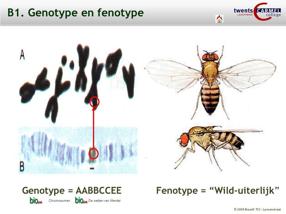 """© 2009 Biosoft TCC - Lyceumstraat B1. Genotype en fenotype Genotype = AABBCCEE Fenotype = """"Wild-uiterlijk"""" ChromosomenDe wetten van Mendel"""