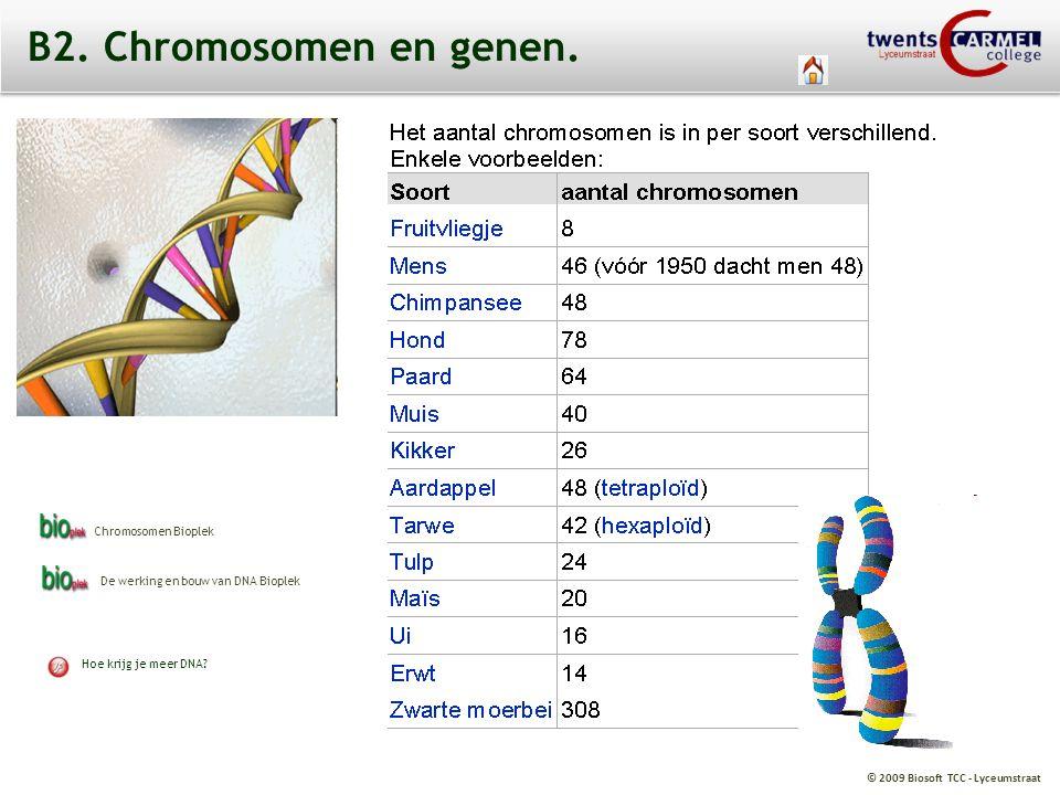 © 2009 Biosoft TCC - Lyceumstraat Blauw Bruin Wit GROOT Heterozygoot Homozygoot recessief Homozygoot dominant B2.